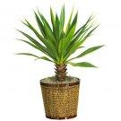 Spiky Agave w/Basket Silk Plant