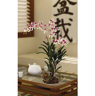 Vanda with Root Base Silk Orchid Flowers - Cream Lavender