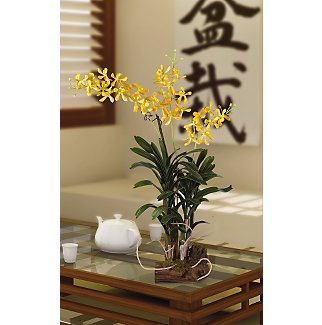 Vanda with Root Base Silk Orchid Flowers - Yellow Brown