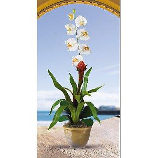 Flame Bromeliad w/Combo Silk Orchid - Cream