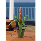 Potted Single Sword Bromeliad - Mauve