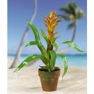 Potted Star Bromeliad - Orange & Peach
