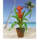 Potted Star Bromeliad - Orange & Red