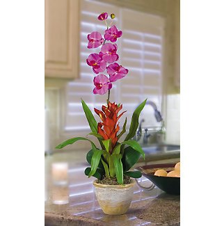 Star Bromeliad w/Combo Silk Orchid - Orchid