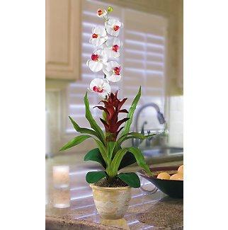 Star Bromeliad w/Combo Silk Orchid - White