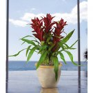 Triple Star Bromeliad Silk Arrangement - American Beauty