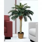 4Ft Sago Silk Palm Tree