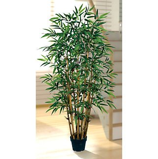 5Ft Bamboo Silk Tree