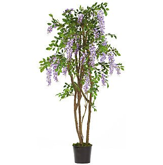 5Ft Wisteria Silk Tree - Mauve