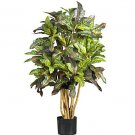 3Ft Croton Silk Tree