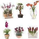 Miniature Arrangements Assortment 3