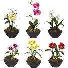 Set Of 6 Little Black Vase Assortment