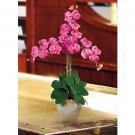 Triple Stem Phalaenopsis Silk Orchid Flowers - Dark Pink