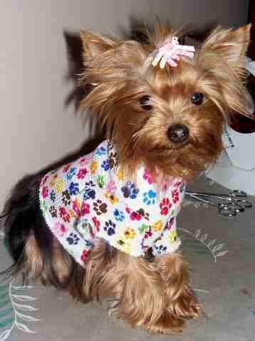 XS Thermal Short Sleeve Dog T Shirt ~ Paw Print
