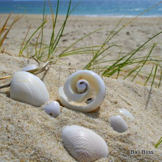 Swirl Shell