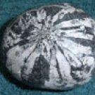 Chrysanthamum