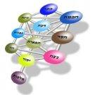 Hebrew Urim Thummim kabbalah software Expert Version