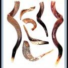 "New 22"" Yemenite Shofar Kudu Horn Polished Kosher Music"