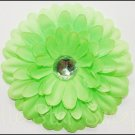Gerber Daisy Flower- Lime