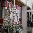 LOT 2 Macrame Plant Hangers PEARL TAN BEADS