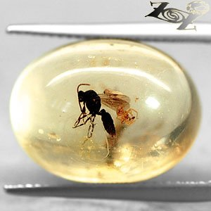7.58 CT.Natural Oval 13*18 mm Perfect Big Mosquito Fossil Inside Yellow Copal �巴