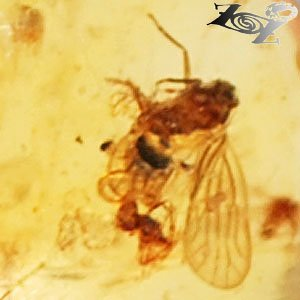 19.43 CT.Natural Heart 30 mm. Perfect Fly Insect Fossil Inside Whole Gold Copal