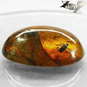 20.47 Ct.Natural Oval Cabochon 21*31 mm Insect Spider Fossil inside Yellow Copal