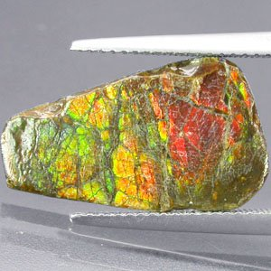 3.6CT.Natural Iridescence Extreme Play Rainbow Color 2 Side Dragon Skin Ammolite