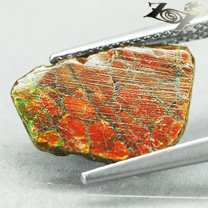 2.26 CT.Natural Iridescence Extreme Play Red Color Dragon Skin Ammolite Slab