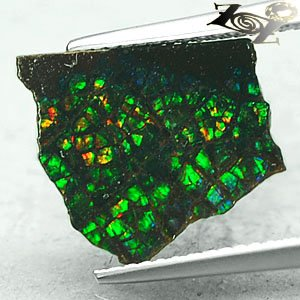 Natural Iridescence Extreme Play Green Color Dragon Skin Ammolite Slab 1.57 CT.