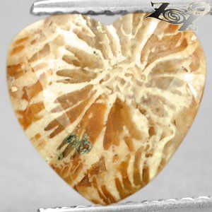 3.46 Ct.Natural Heart 10.3*10.7 mm Clear Polyp Flower Brown Indonesia Coral ��