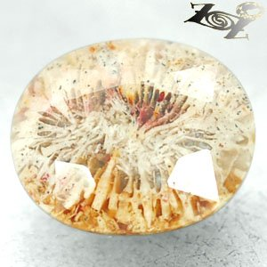 9.06 CT.Natural Oval 12*15 mm Flower Polyp Pattern Yellow Calcareous Coral ��