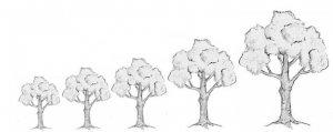 The Fruit Trees Info - CD: