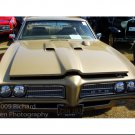 Old Gold GTO