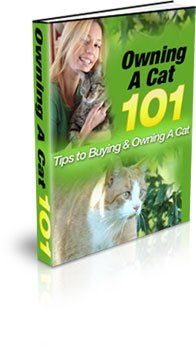 Tips To Buying & Owning A Cat - ebook