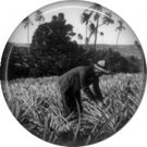 Real Photo Image of Man Working in Pineapple Field, One Inch Ephemera Lapel Pin Button Badge - 0907