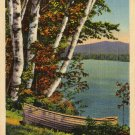 Maine Postcard, Lakeside Birches & Boat, Full Color c.1933