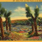 California Landscape Postcard, Joshua Trees and Wildflowers on The Desert c.1937