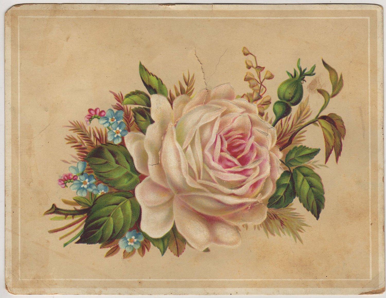 Graduation Souvenir Card, Roses & Forget-Me-Nots, Teacher Photo on Back c.1906