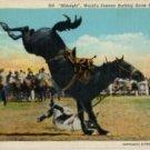 Wyoming Postcard, Midnight the Champion Bucking Rodeo Horse c.1933