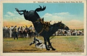 Wyoming Postcard, Midnight the Champion Bucking Rodeo Horse c.1933