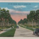 Florida Landscape Postcard, Tamiami Trail Highway c.1926