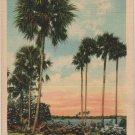 Florida Landscape Postcard, Rustic Log Bridge Amidst The Palms c.1936