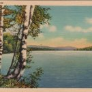 Maine Postcard, Peaceful Lakeside Scene with Birch Trees, Full Color c.1933