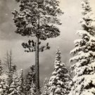 Rose City Michigan Card, Silence in The North Woods, Black & White Real Photo c.1941