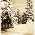 Manistique Michigan Card, Tall Pines & Deep Snow, Black & White c.1941