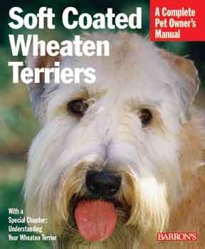 Soft - coated Wheaten Terrier