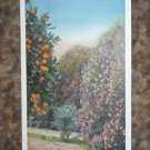 Vintage Postcard Oranges Roses midwinter California PC