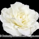 Ivory Peony Rose Bridal Hair Flower Clip Wedding