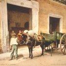 Old Havana Cuba Caribbean mule photo photograph
